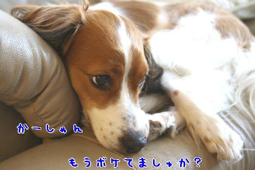 d0013149_0305278.jpg