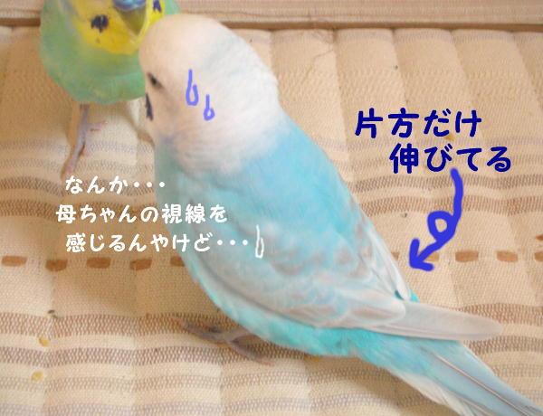 f0132055_2332059.jpg