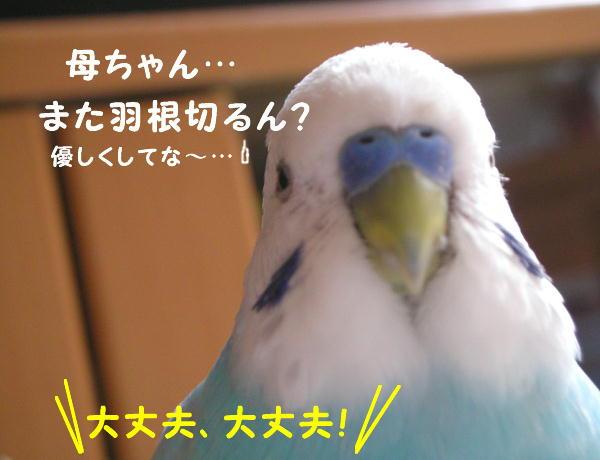f0132055_2351472.jpg