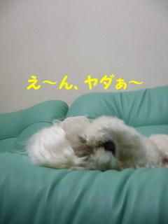 f0145192_16142953.jpg
