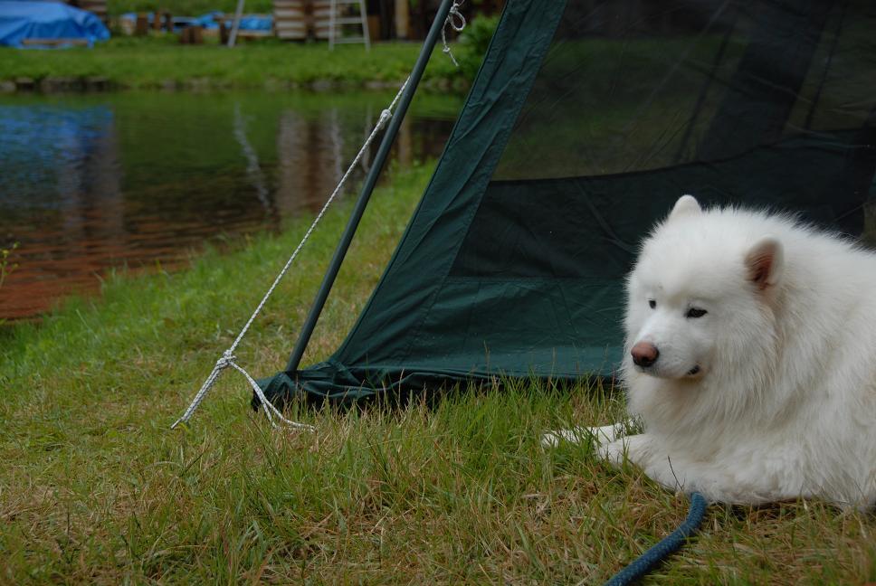 夏キャンプ! 2日目_a0049296_044199.jpg