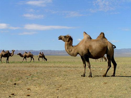 モンゴル ゴビ砂漠3_e0048413_2323385.jpg