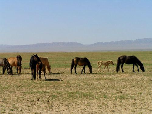モンゴル ゴビ砂漠3_e0048413_2325341.jpg