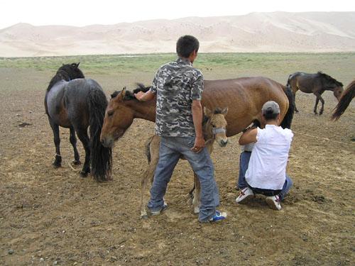モンゴル ゴビ砂漠4_e0048413_23352222.jpg