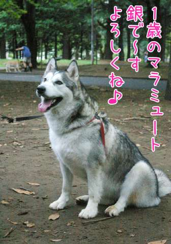 c0062832_1717985.jpg