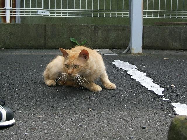 野良猫_e0089232_19194426.jpg