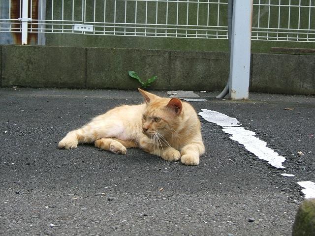野良猫_e0089232_19195598.jpg
