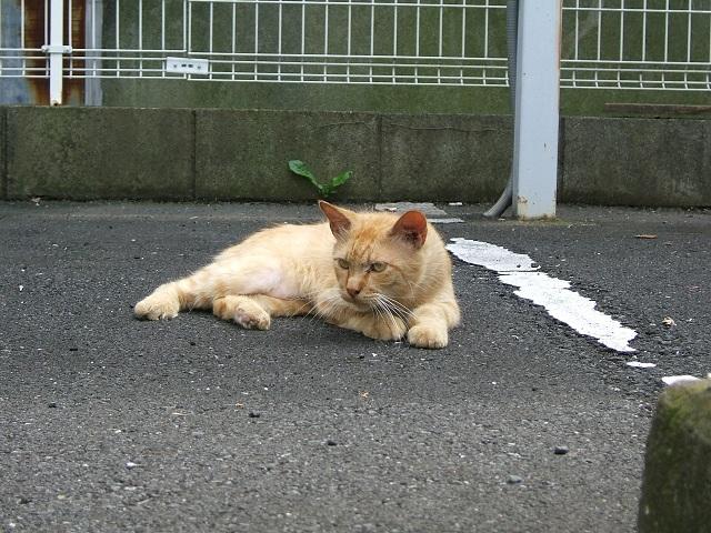 野良猫_e0089232_19201450.jpg