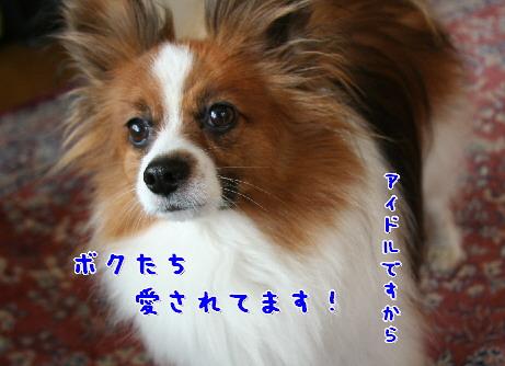 d0013149_2165451.jpg