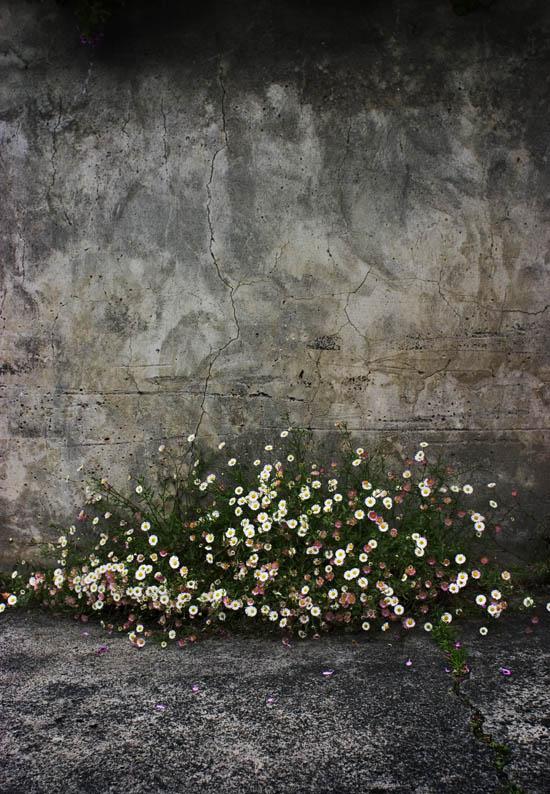 どうして花が撮れないの?_f0137354_17515466.jpg