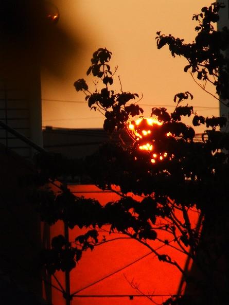 The setting sun _e0003966_22503750.jpg