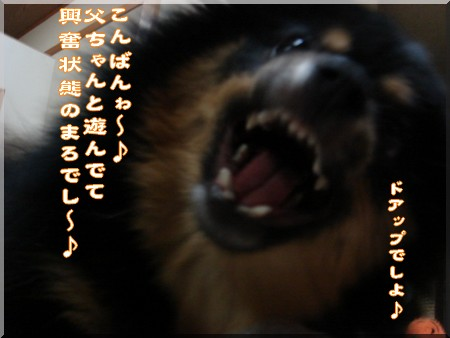 b0078073_2312648.jpg