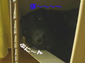 d0043478_22114361.jpg