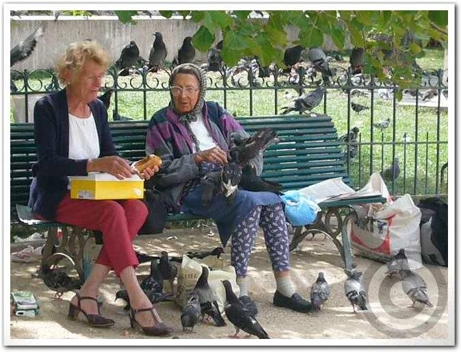 ■野鳥にエサを上げてはいけません・・・(パリ)_a0008105_1946271.jpg