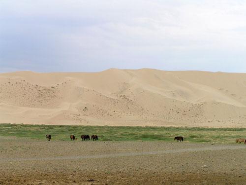 モンゴル ゴビ砂漠5_e0048413_19195948.jpg