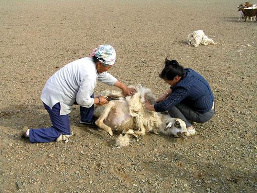 モンゴル ゴビ砂漠6_e0048413_2192758.jpg