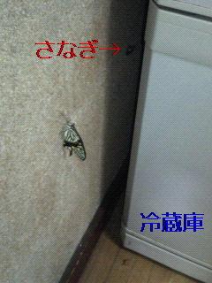 f0126418_9403193.jpg