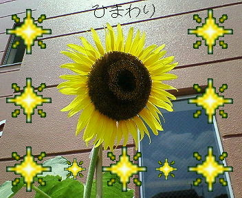 f0081431_14283276.jpg