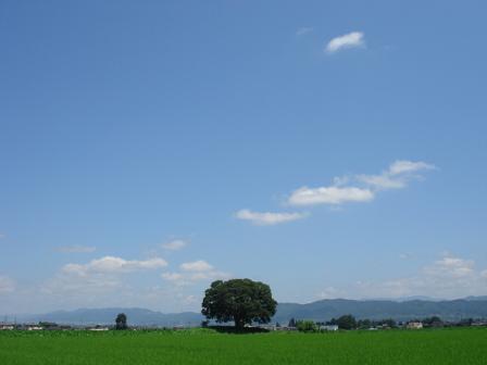 夏の木_a0014840_22585450.jpg