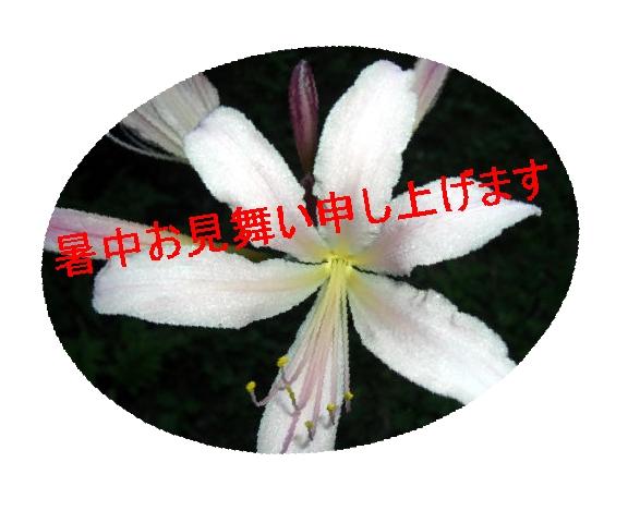 f0031546_21204696.jpg