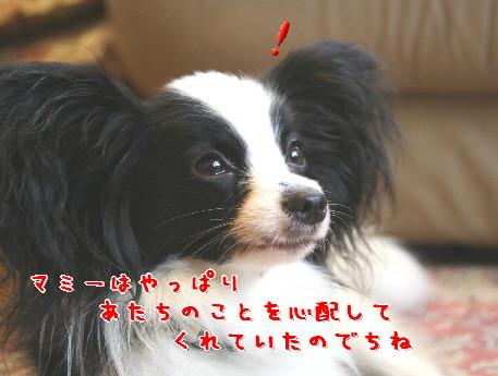 d0013149_1552870.jpg