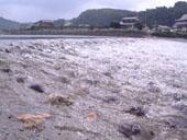 2007/7/21 矢部川流域景観協議会発足_b0013387_20382395.jpg