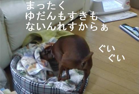 f0123589_1316262.jpg