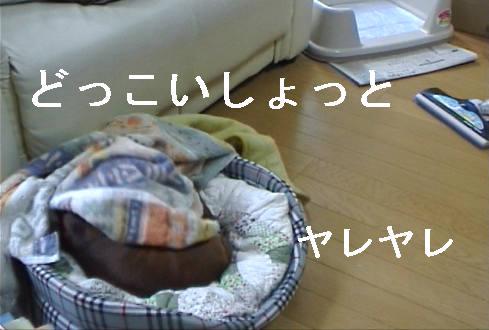 f0123589_13164075.jpg