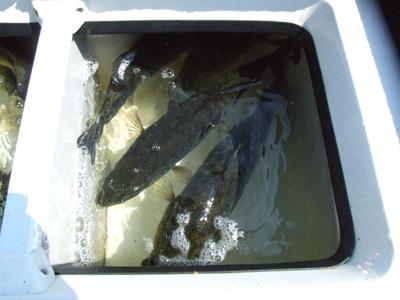 今日は釣れない琵琶湖に行ってきました。釣れないらし~~。_a0097491_21454151.jpg