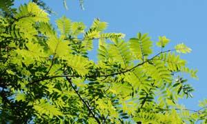 高峯神社 夏の例祭_e0120896_21361819.jpg