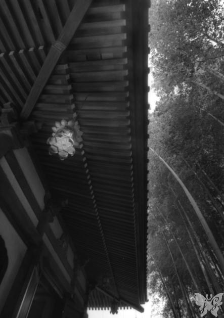 鎌倉、夏の日。_b0053900_17132644.jpg