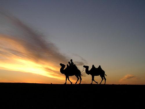モンゴル ゴビ砂漠7_e0048413_17503132.jpg
