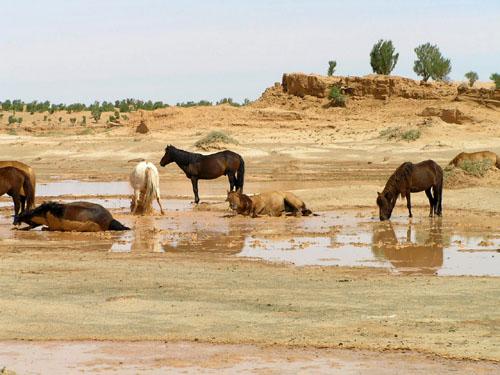 モンゴル ゴビ砂漠7_e0048413_1752195.jpg