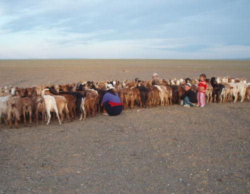 モンゴル ゴビ砂漠8_e0048413_18352621.jpg