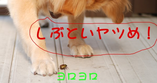 e0020166_15402550.jpg