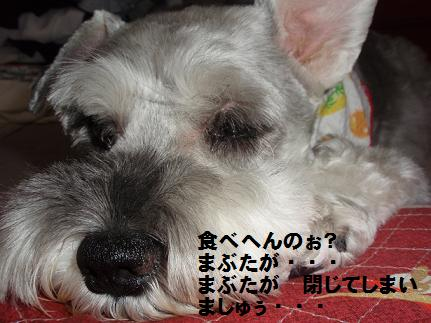 c0098501_1722071.jpg