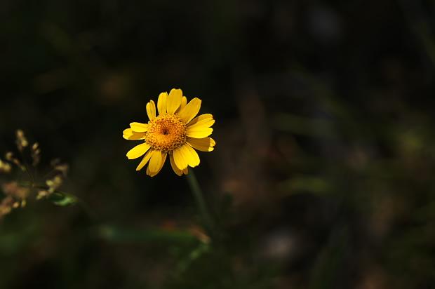 花 光の当たるところへ_f0033205_2130326.jpg