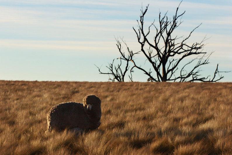 羊をめぐる冒険_f0137354_8111948.jpg