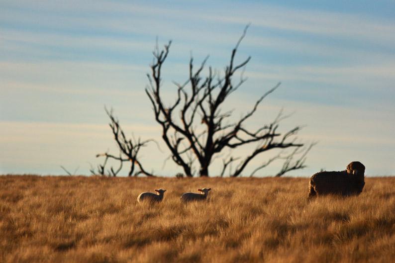 羊をめぐる冒険_f0137354_8113978.jpg