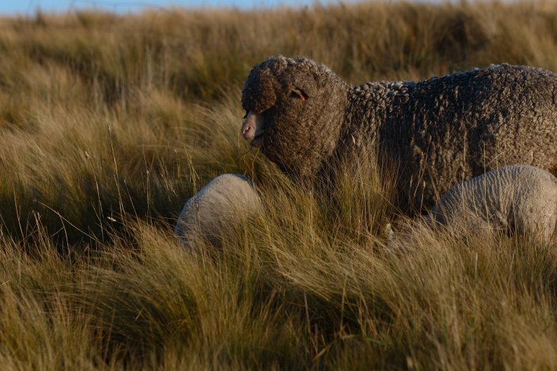 羊をめぐる冒険_f0137354_8124626.jpg