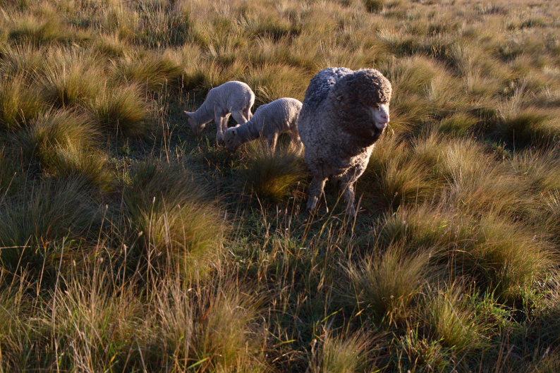 羊をめぐる冒険_f0137354_8132612.jpg