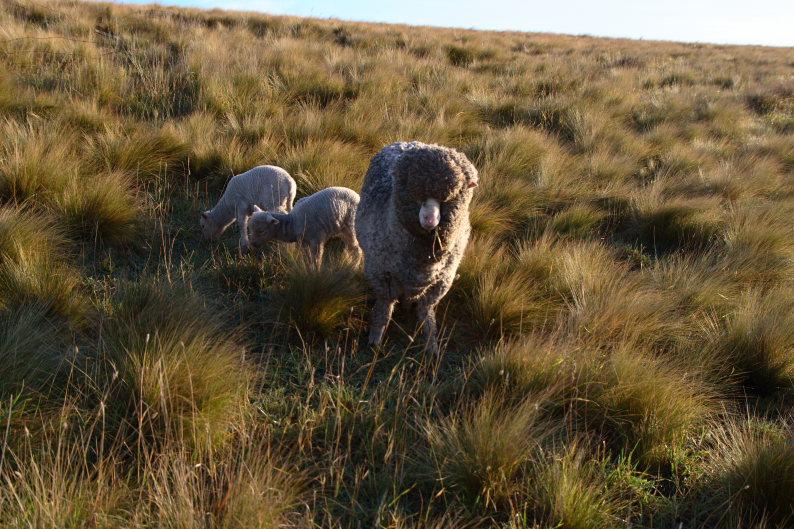 羊をめぐる冒険_f0137354_8134325.jpg