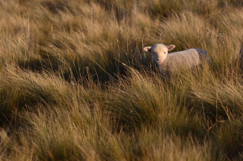 羊をめぐる冒険_f0137354_813583.jpg
