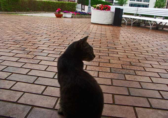 猫のいる風景_e0024958_17433975.jpg
