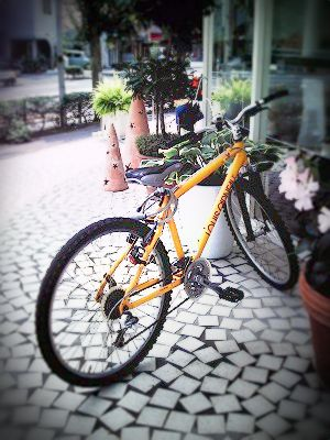 Yellow Bike_e0074308_23561484.jpg