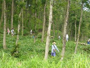 森林ボランティア、2007_d0003224_16432673.jpg
