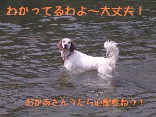 b0113725_1247193.jpg