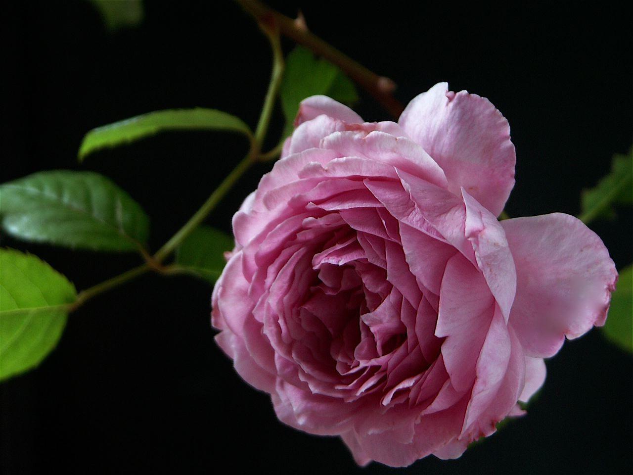 夏の名残の薔薇。_e0044929_172401.jpg