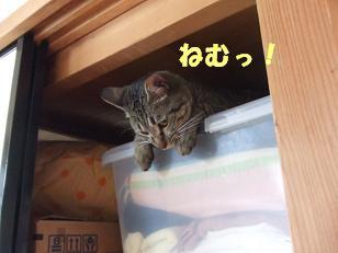 b0118850_1751341.jpg