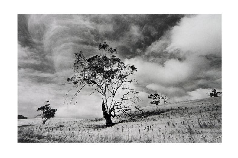 デヴィッド・リンチ的タスマニアの風景_f0137354_1921487.jpg